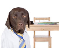 a brown dog dressed up for  dog boarding school