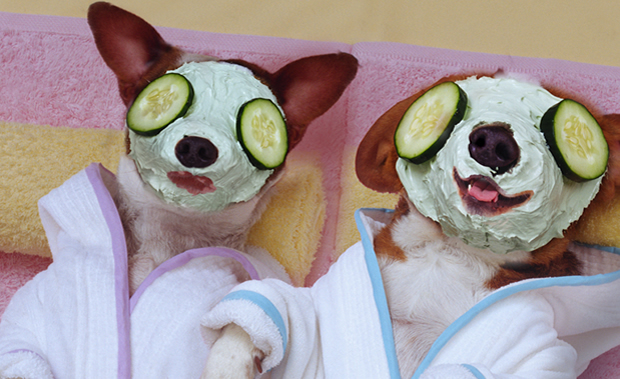 2 dogs getting a facial treatment at our spa